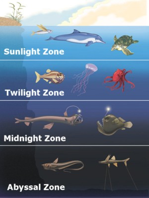 Packages ark diving services for Twilight zone fish